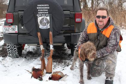 Daehlers Wirehaired Pointing Griffon