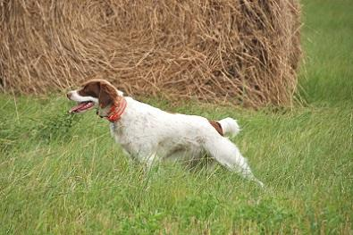 Smith Valley Gun Dogs