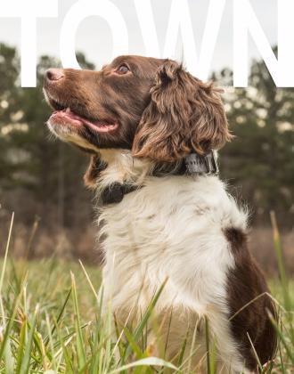 Southern Spaniels