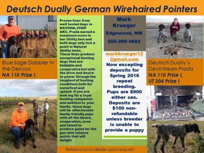 DEUTSCH DUALLY GERMAN WIREHAIRED POINTERS