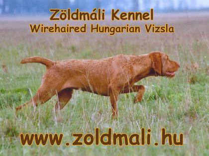 Zoldmali Wirehaired Vizsla Kennel