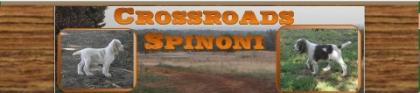 CrossRoads Spinoni