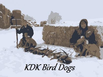 KDK Bird Dogs