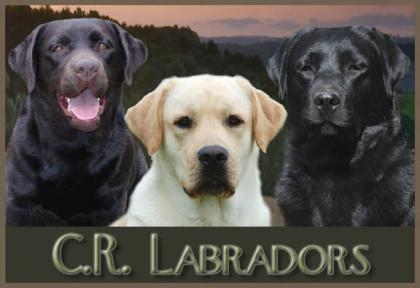 C.R LABRADORS LLC