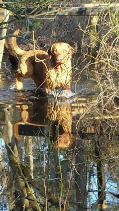 Nacote creek Chesapeakes