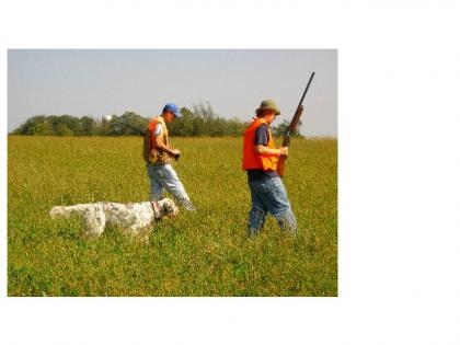 Wyss Ryman Old Hemlock English Setters