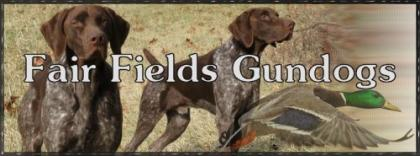 Fair Fields Gundogs