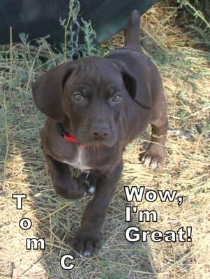 Desert Point Kennel Dog Development Program
