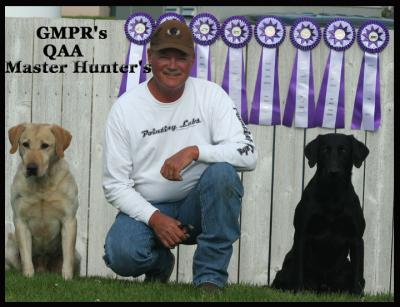 Tiger Mountain Pointing Labradors - 30 years!!