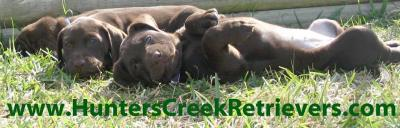 Hunters Creek Retrievers